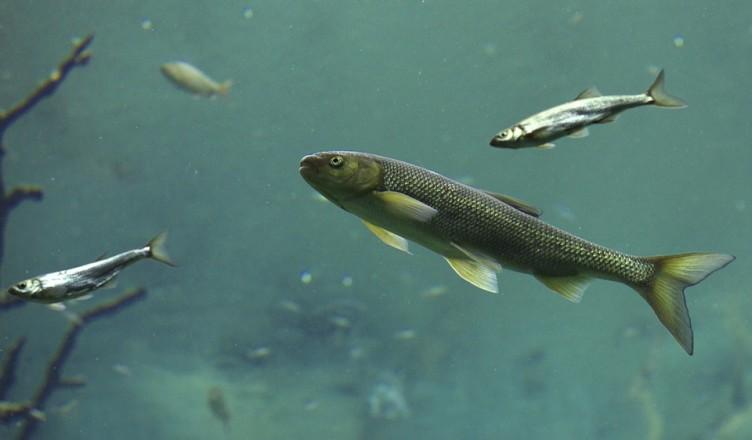 ukoncenie-rybarskej-sezony